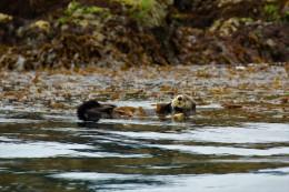 Otter! :)