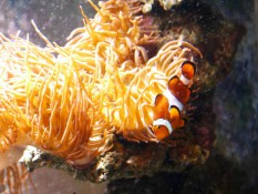 Nemo oder Marlin?