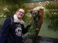 Stinktiere - äh Koalas