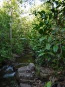 Wasserlauf im Nationalpark