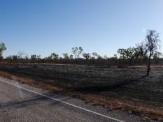 verbrannte Buschlandschaft