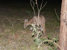 Känguru beim Abendbrot