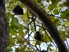 Fledermäuse in den Bäumen