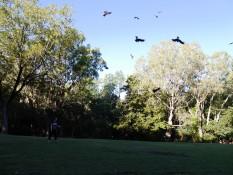 Falken füttern