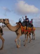 hoch zu Kamel