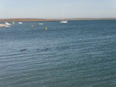 acht der elf Delfine