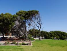 windgepeitschte Bäume