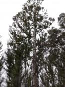 Wendeltreppe im Baum