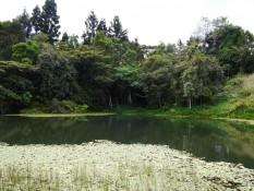 Schnabeltier-Teich
