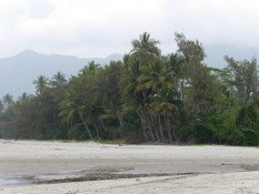 Regenwald bis zum Strand