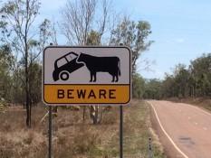 Riesen-Kühe