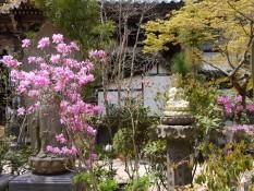 Tempelbuddha