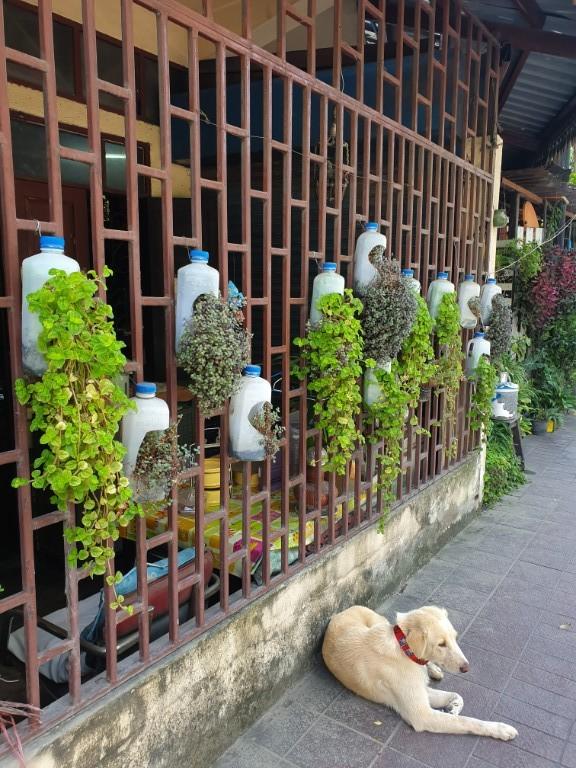 Kreative Pflanzendeko in Chiang Mai