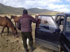 Futter für die Pferde außerhalb des Paddocks
