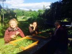 mit Nicole und Sereina, community garden takaka