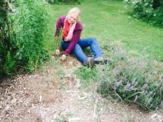 beim weeding, community garden takaka