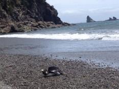 ein pinguin bei der smoothwater bay