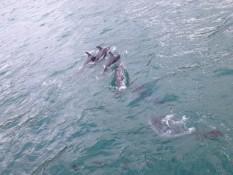 dolphin tour :)