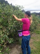 blueberry picking :)