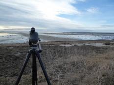 Zweiter Stopp - Küste mit Vögeln