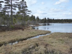 Naturreservat - nature reserve