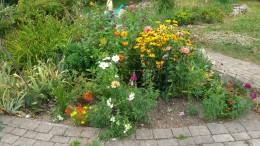 my flowergarden