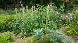 Our productive garden