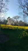 Edinburgh Botanic Garden