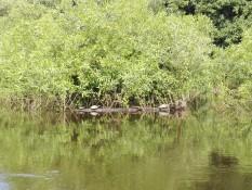 Sonnenbaden bei Familie Turtuga