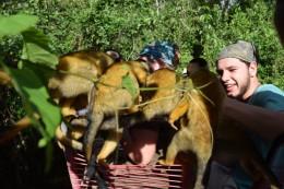 ...kamen die Affen...