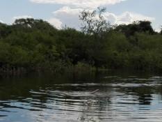 Ein rosa Flussdelfin. In der Rolle des Badmeisters