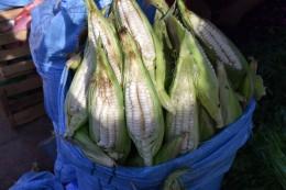 Choclo blanco - weißer frischer Mais