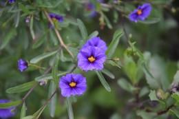 Flora des Canyons