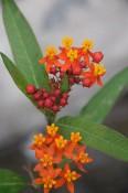 Flores del cañón