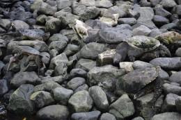 Suche die Schildkröten! ;-)