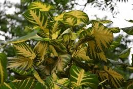 Schöne Baumblätter