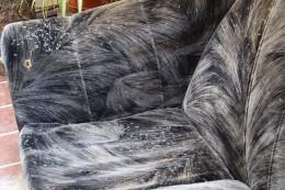 Sofa voller Fliegenflügel