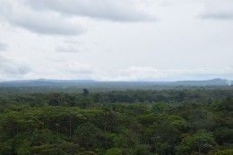La selva ecuatoriana