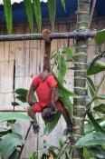 Der süße Affe