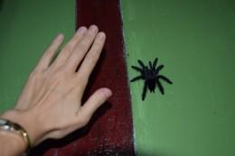 Größenvergleich mit meiner Hand