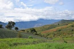 Die Landschaft mit einem Ananasfeld im Vordergrund