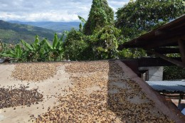 Trocknung der Kaffeebohnen auf dem Dach