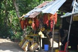 Palmenfrucht Corozo