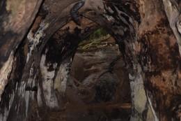 Fledermäuse - Murcielagos