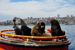 die haben wir bei der Hafenrundfahrt entdeckt! :D riesige Tiere!