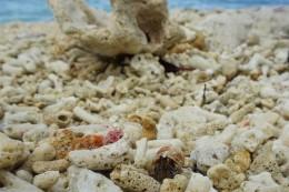 wenn man genau hinsah, konnte man viele Krabben entdecken
