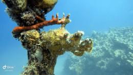 Anglerfisch (engl. Frogfish) - wer kann ihn erkennen?