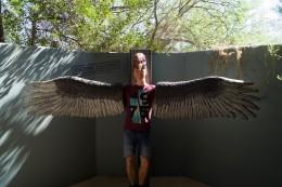 Der Greifvogel :D