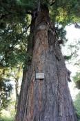 Hier gibt es sogar Redwoods!