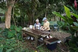Lise und Rieke produzieren (technisch gesehen ernten) die Muttererde und fischen nach Würmern. Rundherum: Die grüne karibische Natur (rechts: die riesigen Blätter sind die eines Bananenbaums)